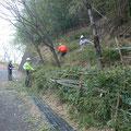 間伐した竹を整列