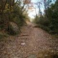 落葉のハイキング道
