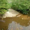 大量の土砂がすいれん池に...