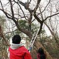 木登り体験