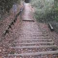 ⑦甘い香りのする300段の階段(カツラ)