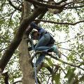 木登りにも挑戦〈小)