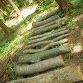 ナメコのホダ木