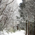 樹氷(1月)