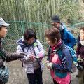 自然の解説:タラヨウは郵便の木???