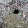 ハイキング道に誰かが開けた穴