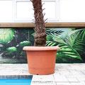 Zoo Graffiti Loft Pool Illusion Malerei handgemalt auf Wände