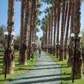 Palmenweg zum Beach