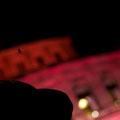 Spinnen vor der Semper Oper. Dresden