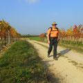 ....weiter durch die Weingärten..