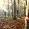 ...weiter durch den Rohrbacherwald
