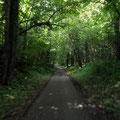der Radweg im Urwald, bei Frohnleiten
