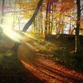 ..jetzt wieder rauf durch schöne Wälder...