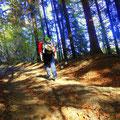 ...ein schöner Waldweg