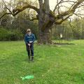 die Tausendjährige Eiche, bei Bad Blumau