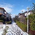 2014年2月15日の大雪 馬堀海岸3丁目の緑道