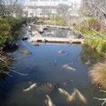 横須賀市下町浄化センターのトンボ王国