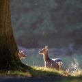 Fotograaf: Bert van den Broek