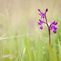 Orchidee  - Fotograaf: Mark van Veen