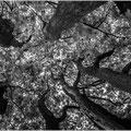 Bomen - Fotograaf: Cunie Sleijpen