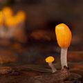 Beekmijtertje - Fotograaf: Eric Gibcus