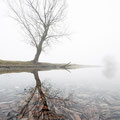 Boom in de mist - Fotograaf: Lex Vermeend
