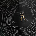 Spin in web - Fotograaf Marius Hennevanger