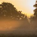 Pieter van Dijk - Zonsopkomst op Leersumse veld