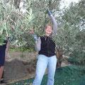 Olivenernte ist lustig