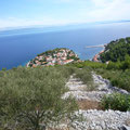 Oliven mit Blick auf Prigradica