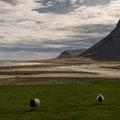Bardaströnd in den Westfjorden an der 62