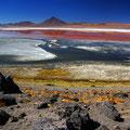 Laguna Colorada IV