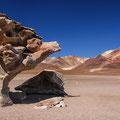Arbol de Piedra II