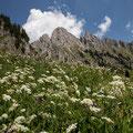 Blick vom Alpenrosenweg zur Gehrenspitze