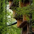 Baobab - ein Baumhaus-Hotel II