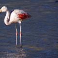 Flamingos an der Laguna Helionda II