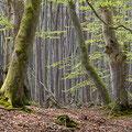 Darßer Wald 2
