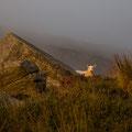 Wicklow Mountains, Wicklow Gap