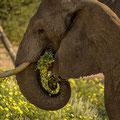 Wüstenelefanten im Aba Huab