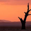 Kanaan Dancing Tree