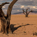Kanaan Dancing Trees