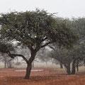 Namibia begrüßt uns