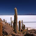 Isla Incahuasi III