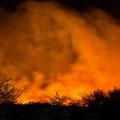 Etoscha brennt