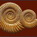 Jura-Ammoniten I