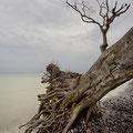 Impressionen von Rügens Kreideküste X