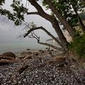 Impressionen von Rügens Kreideküste I