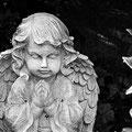 Melatenfriedhof Köln 1