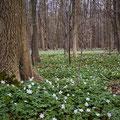 Geisterwald bei Nienhagen 4