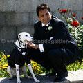 MATRIMONIO WEDDING DOG SITTER PUGLIA